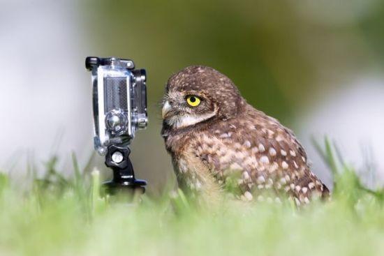 Borrowing Owl: Megan Lorenz, Photographer
