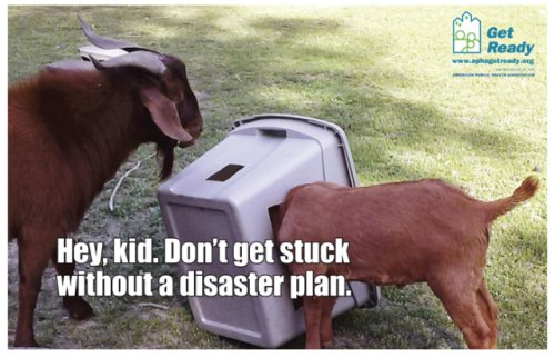 Goats from 2016 Ready Pet Go Calendar: Photo by Debbie McCluske, APHA's Get Ready campaign