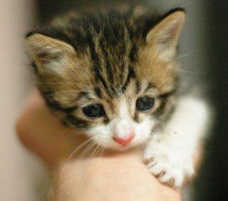 Kitten in Hand: Image by Latch.R, Flickr