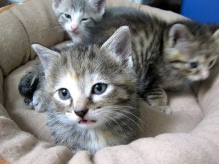Kittens!: Image by London Looks, Flickr2