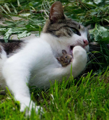 Feline Personalities: Sometimes cats can befriend those that would normally be prey