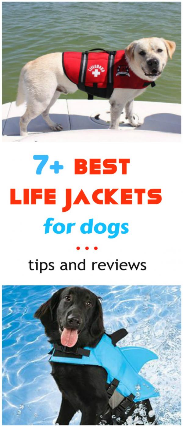 Best Life Vests For Your Dog