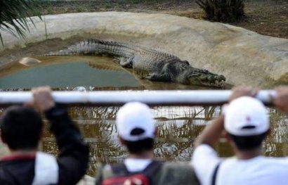 Lolong in captivity. (Image via Yahoo! News)