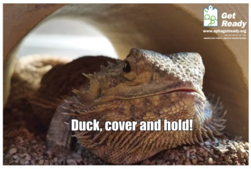 Rigby the Bearded Dragon: Photo by Nikki Caito, APHA's Get Ready campaign