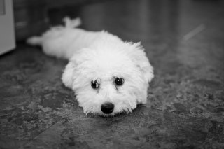 New Puppy: Image by M.CERASOLI, Flickr