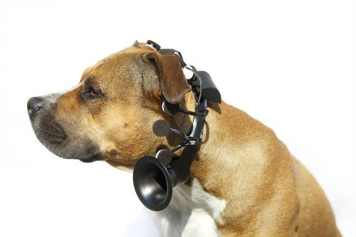 Prototype of No More Woof Headset: Translate animal thoughts into human words