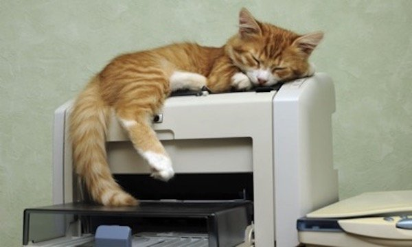 Cat sleeping on a printer