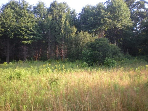 Meadow in Pelham Bay Park: Image by Ruth Gyure