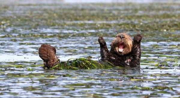 Penny Palmer, Cheering Sea Otter