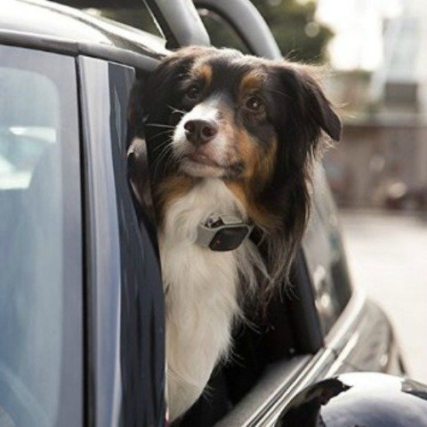 Safety Devices for Your Pets: Reduce harm and keep track of your pets with safety devices designed for them