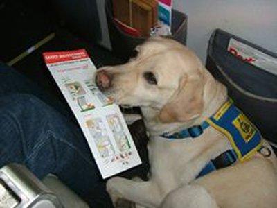 Airport Service Dog