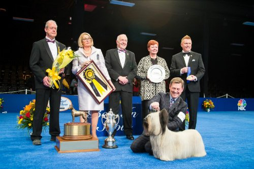 """Purina's 2015 National Dog Show with the Winner """"Charlie"""": Dog show Image via Best in Show Daily Facebook"""