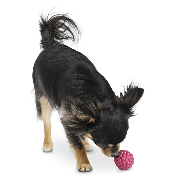 Planet Dog Orbee Tuff Produce - Raspberry Toy