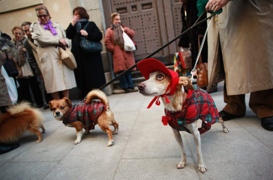 Pets wait in line to get blessed on St. Anthony's Day.  Plaid are in for dogs this winter: © Reuters, photo by Susana Vera