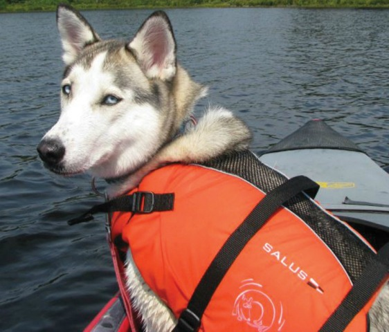 Salus Skippy Dog Life Jacket