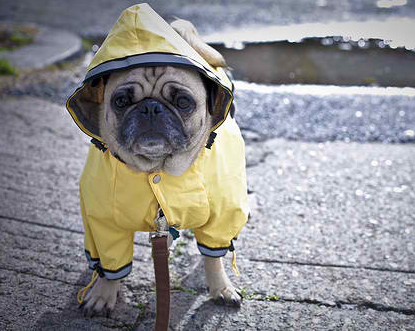 Pet Owners Need To Be Hurricane Ready