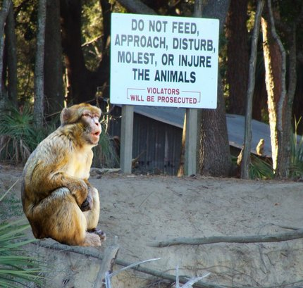No Trespassing: Monkey Business Not Open To Beaufortonians