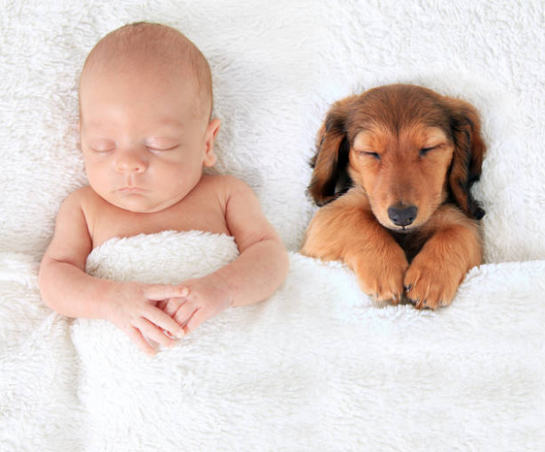 Is Puppy & Baby Company Or A Crowd?