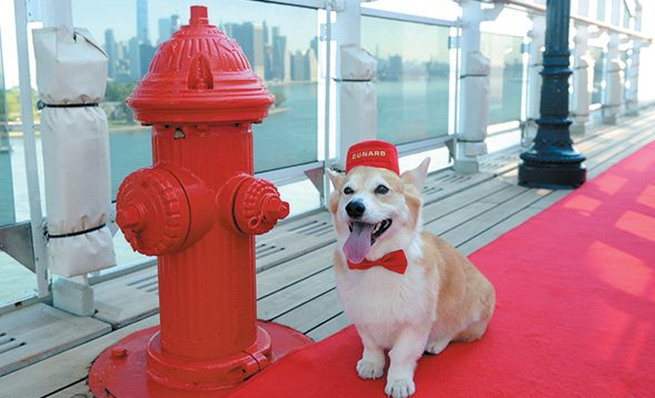 Pets On Deck: Cruising The High Seas