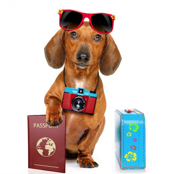 Passport For Pooches