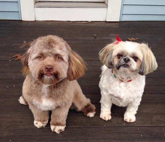 When Dogs Look Human