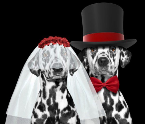 Weddings Going To The Dogs