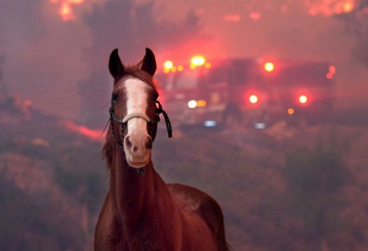 California Wildfires Counting Toll With Wildlife & Pets
