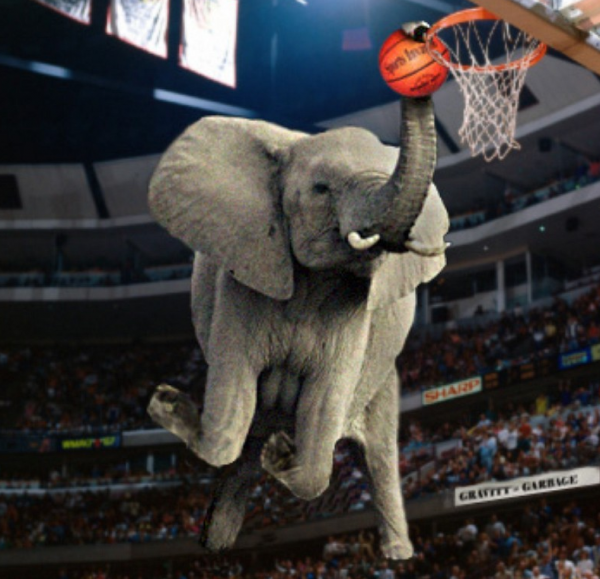 An Elephant & His Slam Dunking Trunk