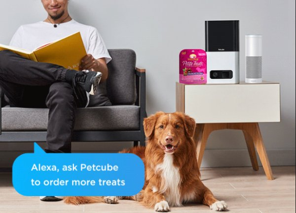 Petcube Devices Get Alexa Upgrades