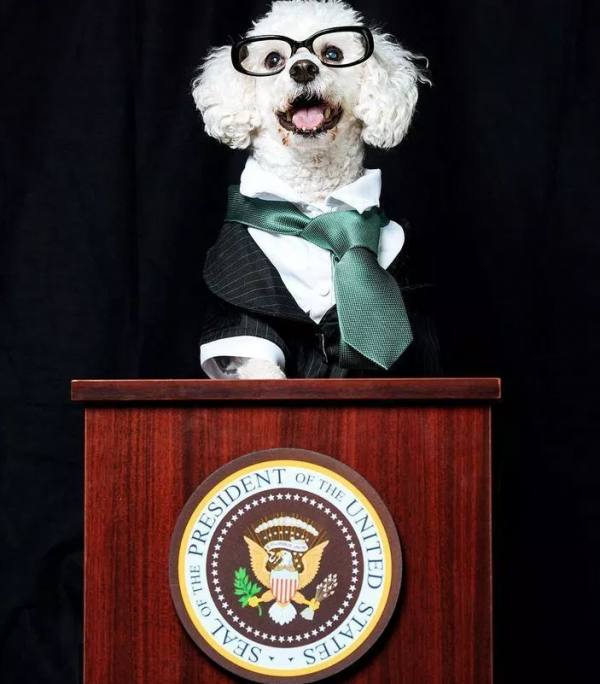 First Dog Candidates For 2020