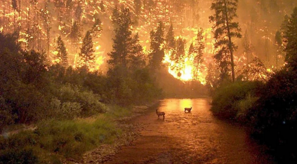 Ten Percent Of Earth's Animals Are Affected By Amazon Fires
