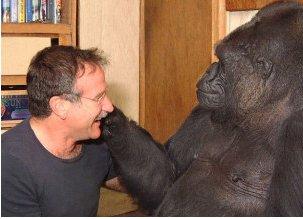Robin Williams & Koko