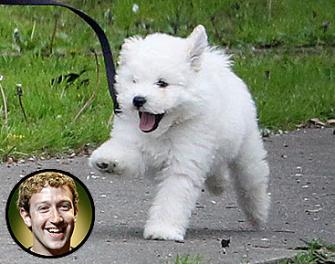 """""""Beast,"""" Mark Zuckerberg's Hungarian Puli dog"""