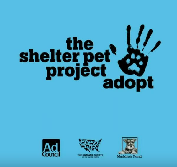 The Shelter Pet Project