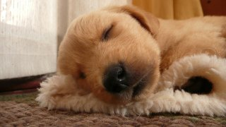 Sleeping Libe.: Image by Alonso_Inostrosa, Flickr