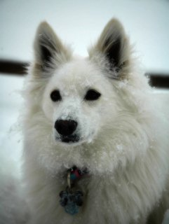 Snow Dog: Image by KellyWoolen, Flickr