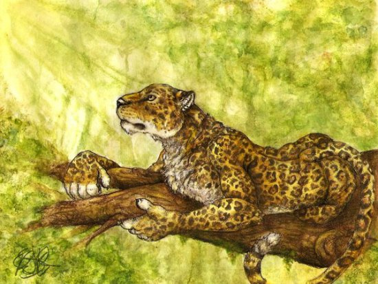 Sunshine by Garcia: This jaguar is catching some rays. Jaguar art by Garcia