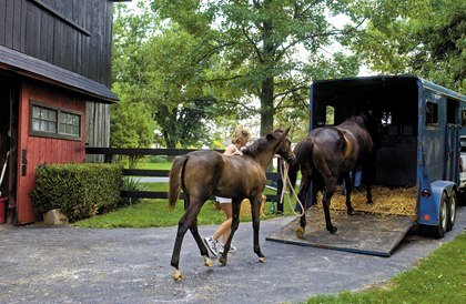 Train your horse to enter a trailer BEFORE a natural disaster occurs.