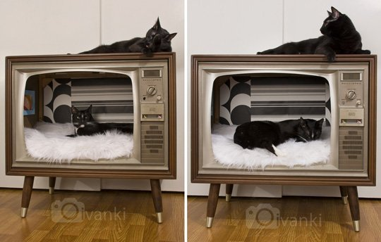 DIY cat bed: by Melissa via moderncat.net