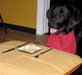 The Ultimate Dog Treat: Image by Var Resa, Flickr