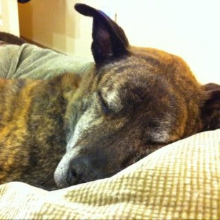 This Old Dog is One of the Sweetest Creatures I've Ever Known: Image by Moriartys, Flickr
