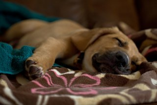 Tip Sleeping: Image by Deansouglass, Flickr