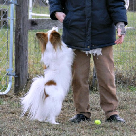 Training Your Dog Not to Jump Up: Teach them through patience & repitition