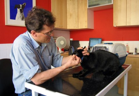 A Veterinarian and a Cat (Photo by Andrew Dunn/Creative Commons via Wikimedia)