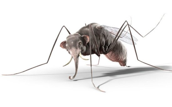 Elephant Mosquito Art by Mangold: This Mosquitofant never forgets how thirsty he is!