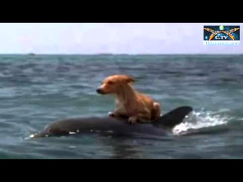 Dolphin Rescues Dog