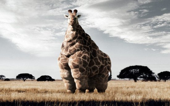 Giraffe Art by Mangold: This giraffe needs to take more advantage of those wide open spaces.
