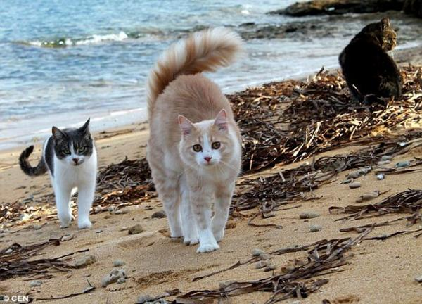 Cats on the Beach in Su Pallosu