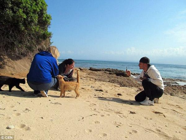 Cats on the Beach in Su Pallosu Visiting with Tourists