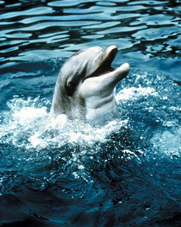 flipper delfin
